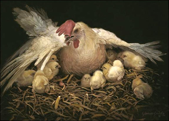 ayamdan anaknya